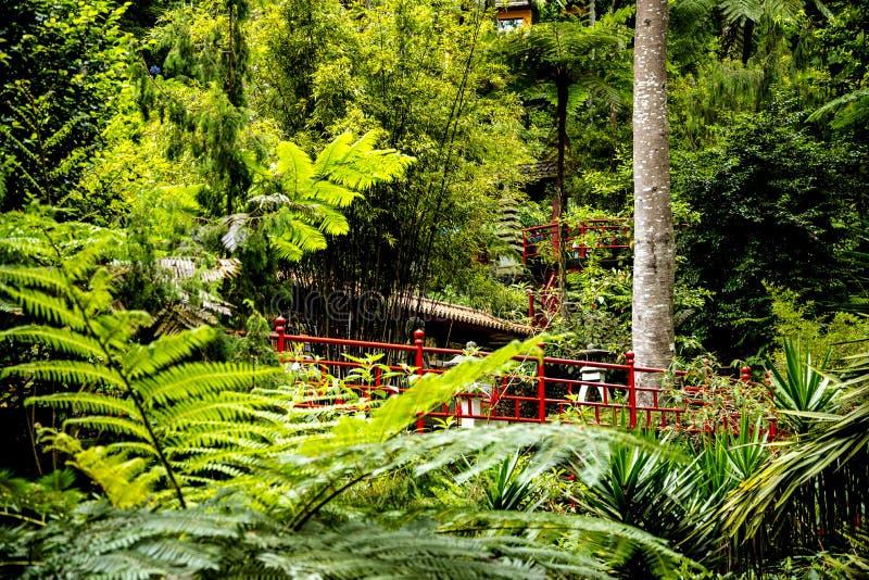 Tropisk trädgård på Monte ovanför den Funchal madeiran arkivfoto