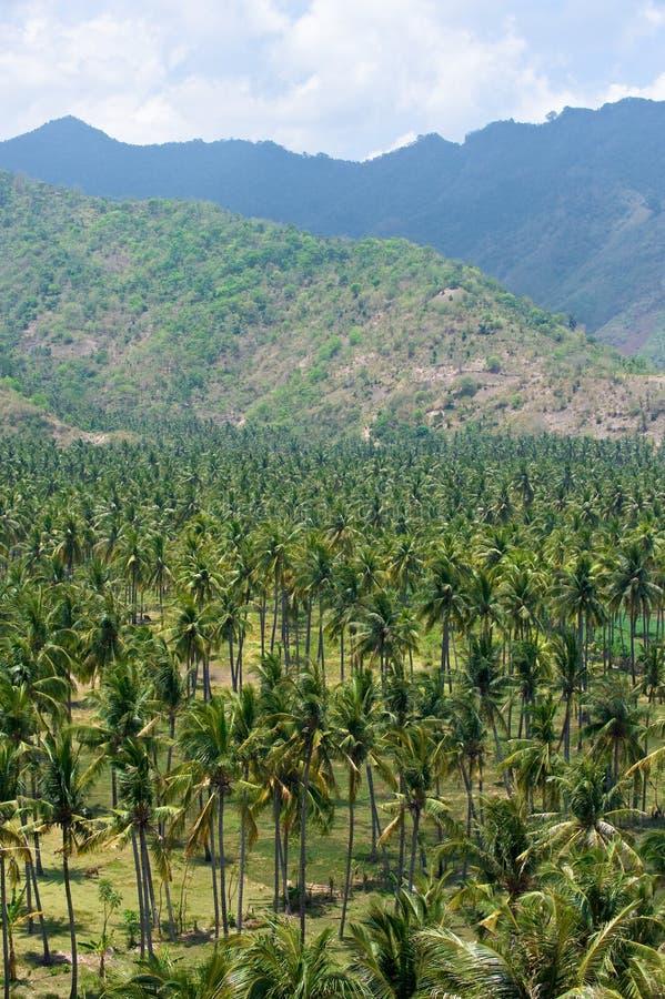 tropisk trädgårds- ö för kokosnöt arkivfoto