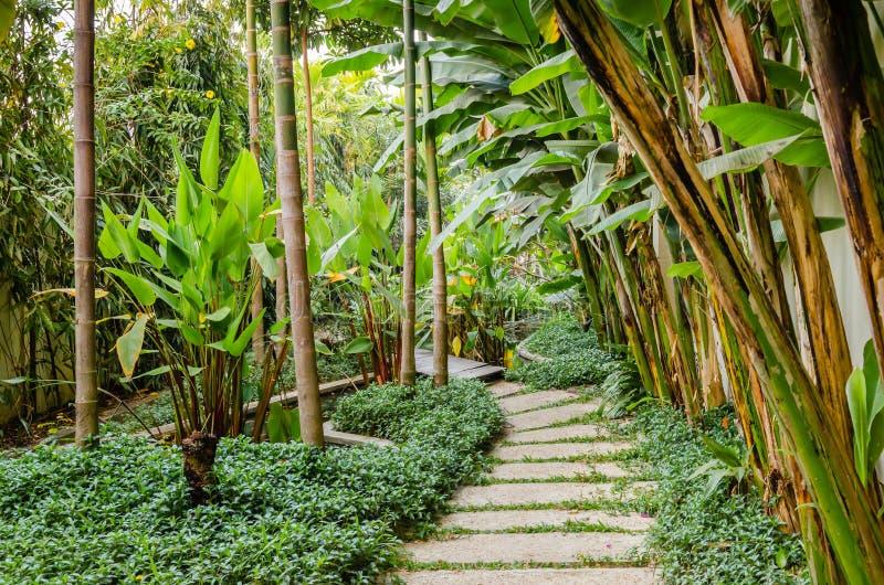 tropisk trädgårds- bana fotografering för bildbyråer