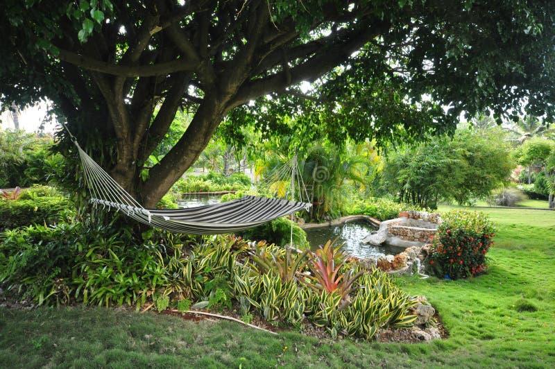 Tropisk trädgårds- hängmatta fotografering för bildbyråer