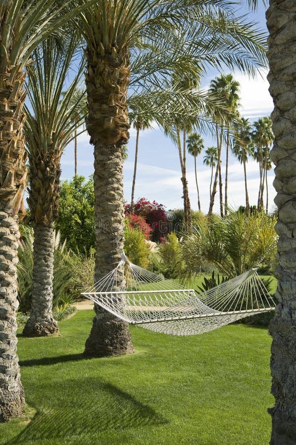 tropisk trädgårds- hängmatta royaltyfri bild