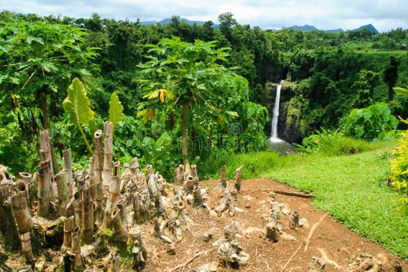 Tropisk trärainforest, lösa buskar, infödda växter och att klippa ca-rottingar av bambuträd, Samoa, Polynesien royaltyfri foto