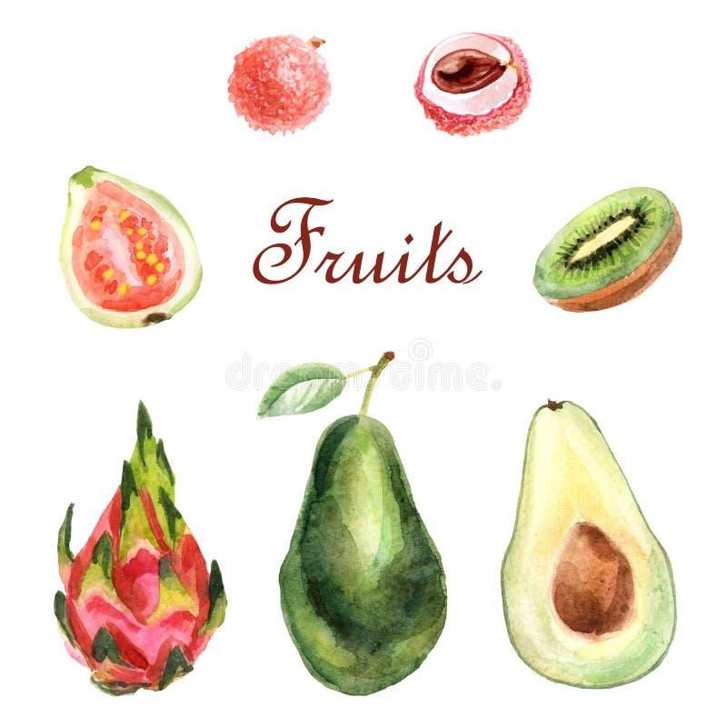 Tropisk uppsättning för vattenfärg av frukter på en vit bakgrund royaltyfri illustrationer