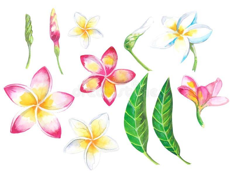 Tropisk uppsättning för vattenfärgsommar för designbaner eller reklamblad med exotiska palmblad, Plumeriablommor arkivbilder