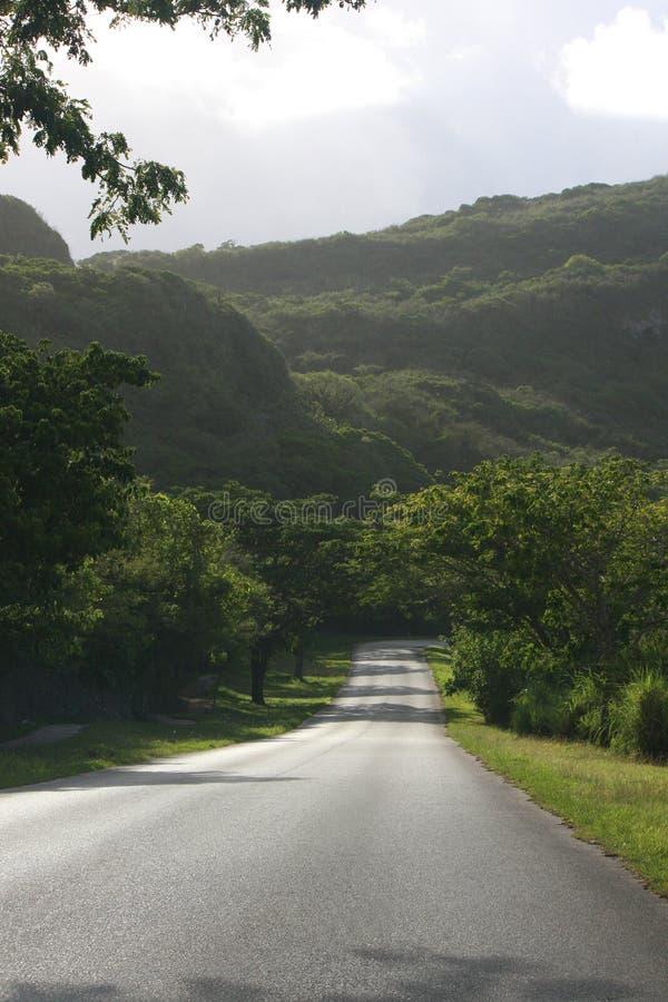 Tropisk väg för morgon arkivbild