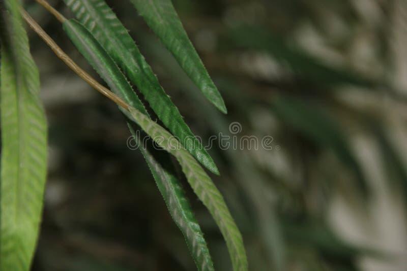 tropisk växt royaltyfri foto