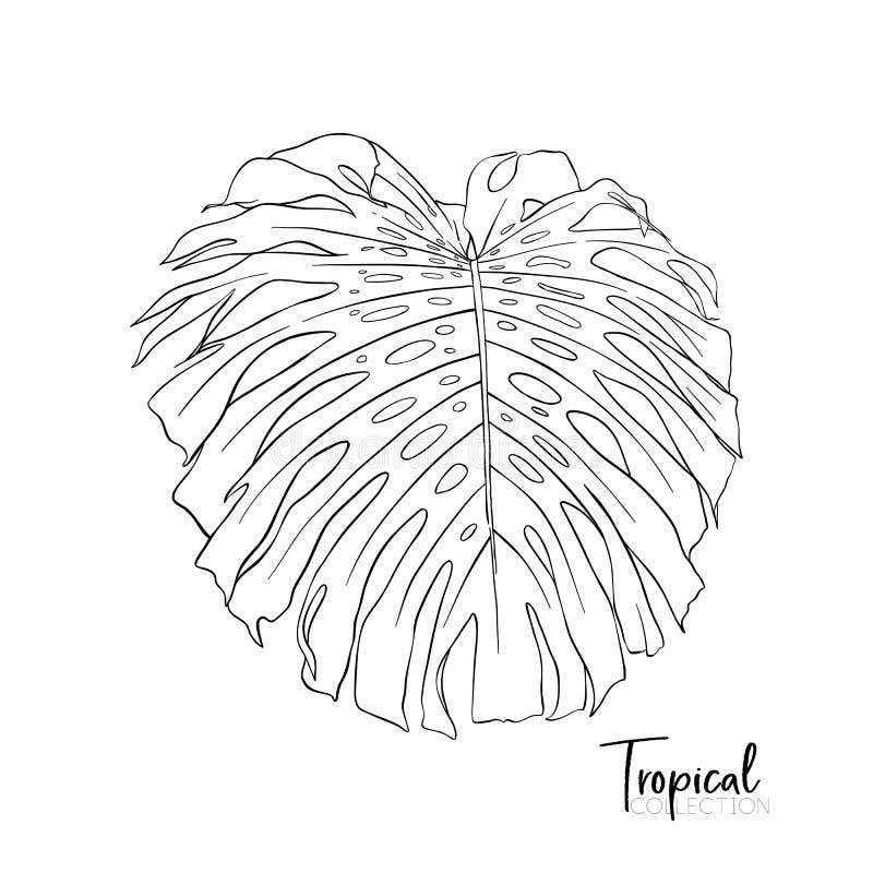 tropisk växt Vektorillustration i botanisk stil stock illustrationer