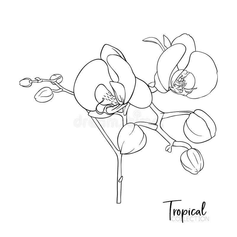 tropisk växt Vektorillustration i botanisk stil vektor illustrationer