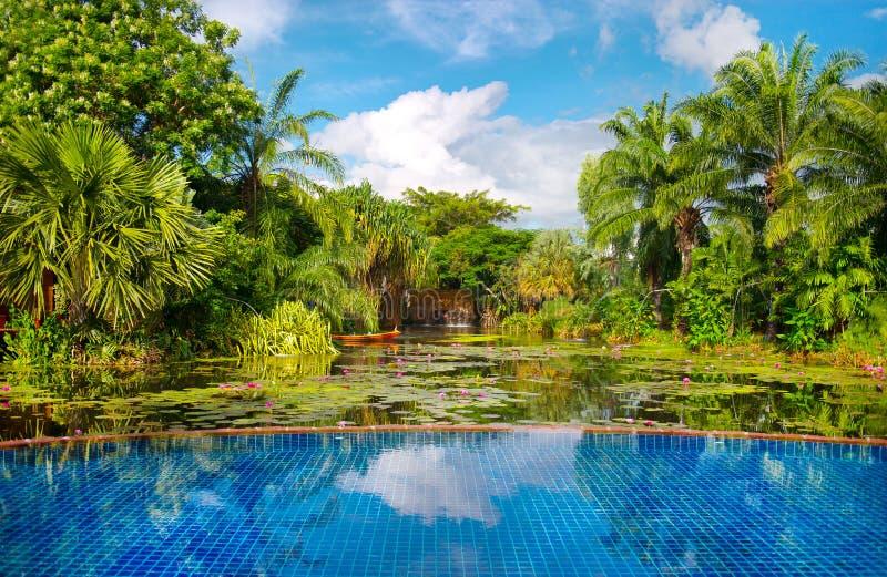 tropisk växtpölsimning royaltyfria foton