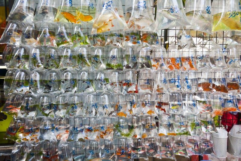 tropisk vägg för fiskförsäljning arkivfoton