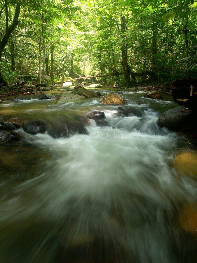 tropisk vattenfall för berg arkivbild