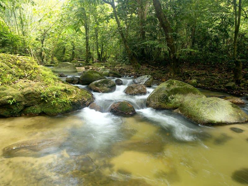 tropisk vattenfall för berg royaltyfria foton