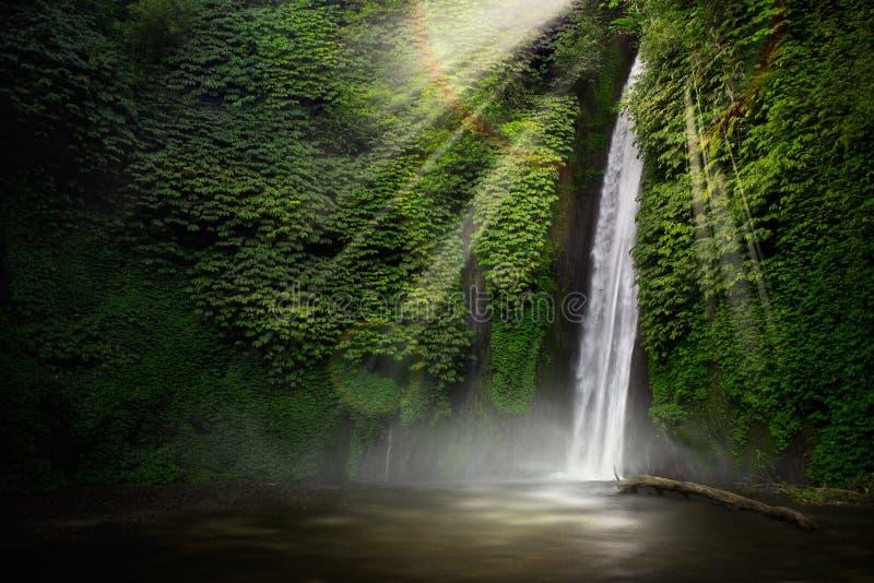 tropisk vattenfall för skog royaltyfri fotografi