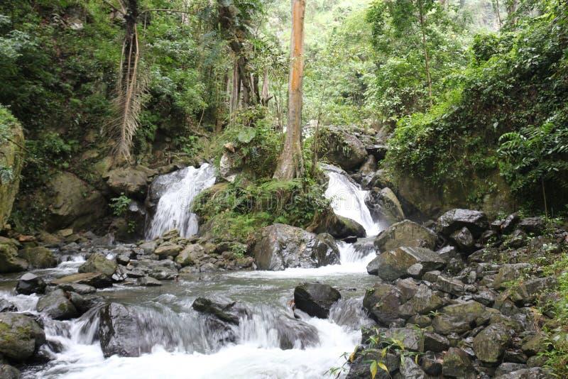 Tropisk vattenfall i rainforesten royaltyfria foton