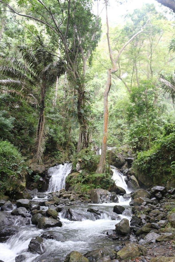 Tropisk vattenfall i rainforesten fotografering för bildbyråer