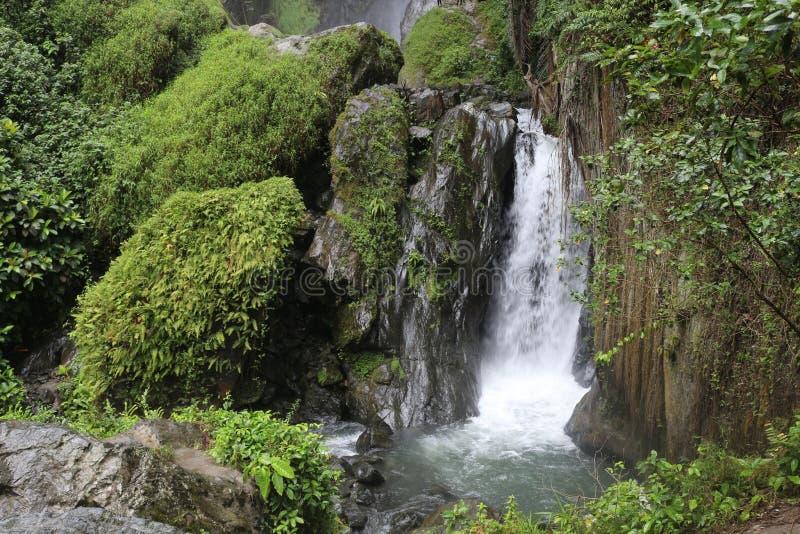 Tropisk vattenfall i rainforesten royaltyfri bild