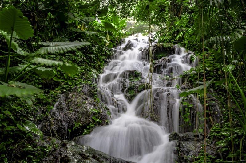 Tropisk vattenfall med rörelsesuddighet i mexicansk rainforest royaltyfri fotografi