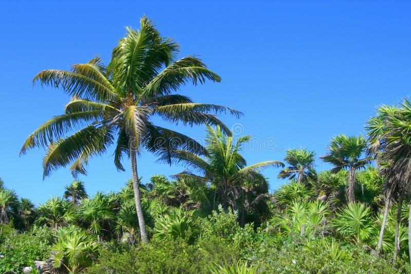 Tropisk vegetation i Caribbeansen royaltyfri bild