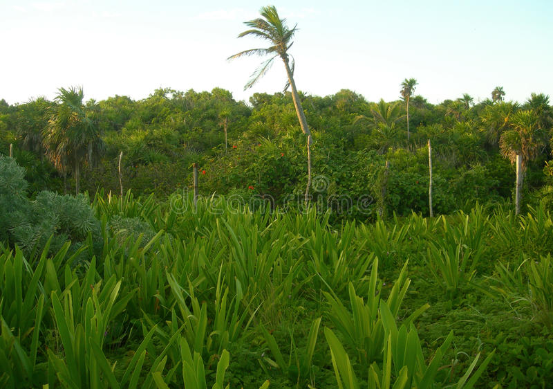 Tropisk vegetation i Caribbeansen fotografering för bildbyråer
