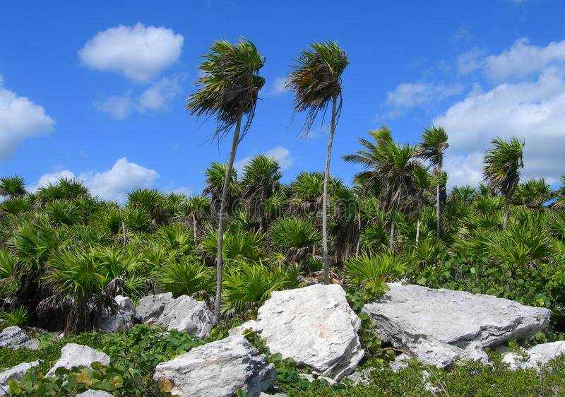 Tropisk vegetation i Caribbeansen Mexico arkivfoto