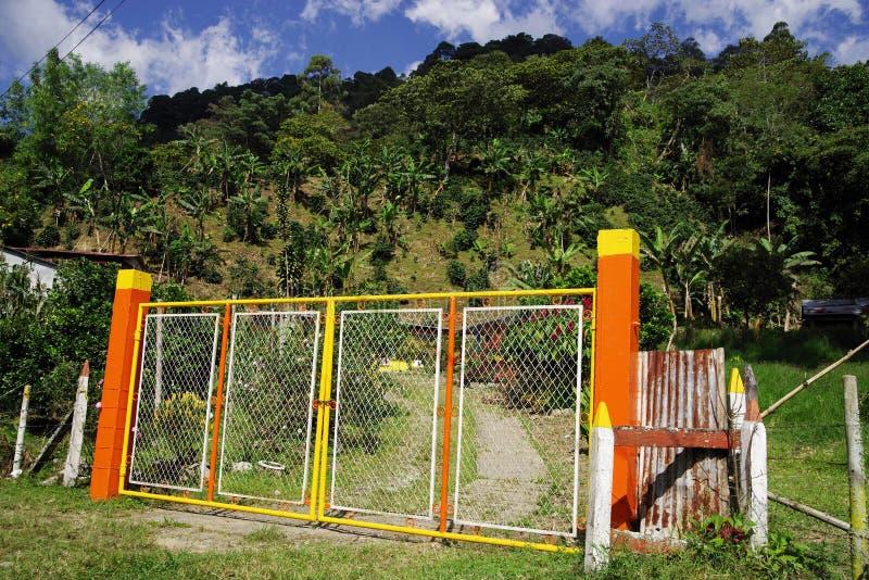 Tropisk vegetation i den Cordiliera centralen royaltyfri foto