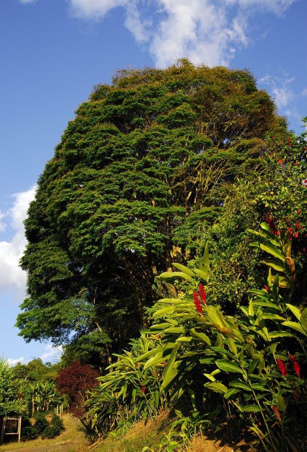 Tropisk vegetation i den Cordiliera centralen royaltyfria foton