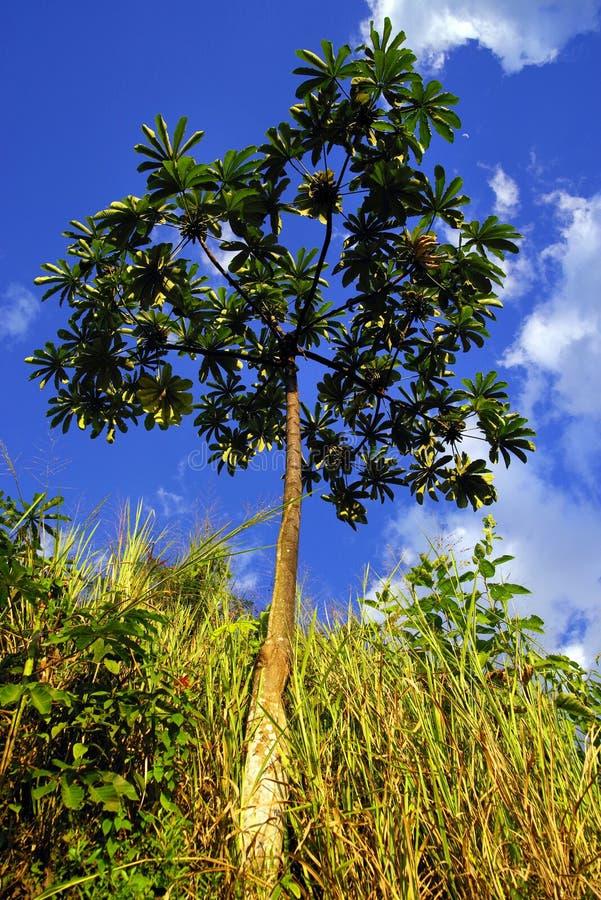 Tropisk vegetation i den Cordiliera centralen arkivbild