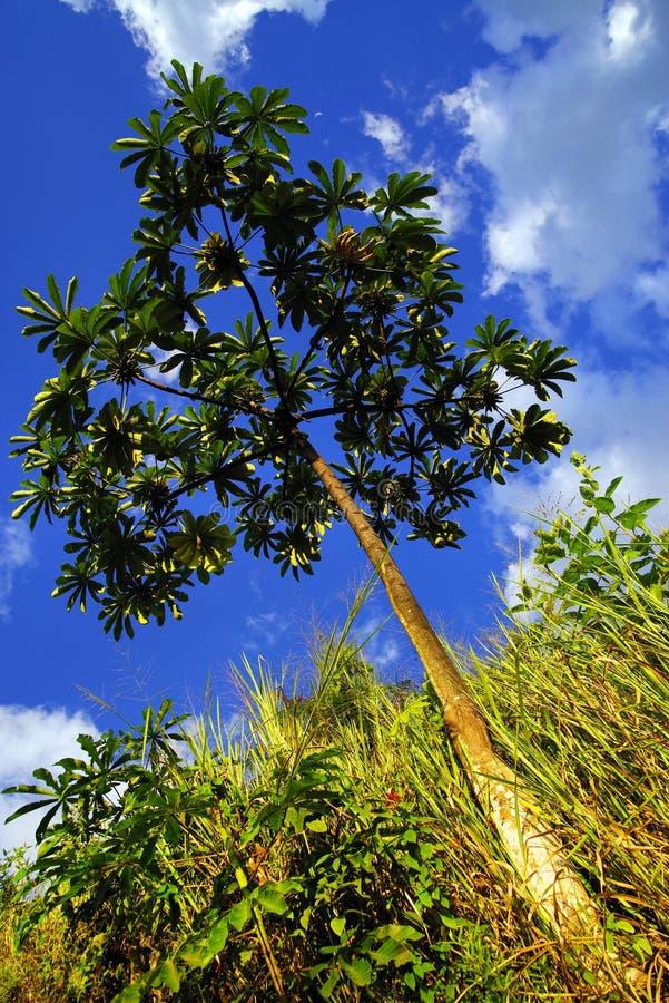 Tropisk vegetation i den Cordiliera centralen arkivfoton