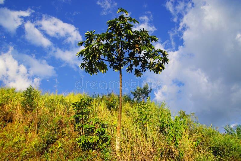 Tropisk vegetation i den Cordiliera centralen fotografering för bildbyråer