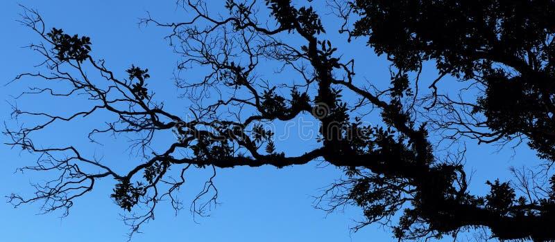 Tropisk vegetation mot himlen som en kontur royaltyfria bilder
