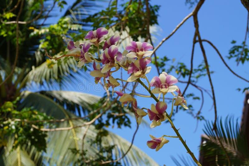 Tropisk vegetation på öar i Indiska oceanen royaltyfria foton