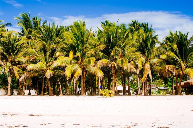Tropisk vit sandstrand med gröna palmträd Exotiskt öparadis arkivfoto
