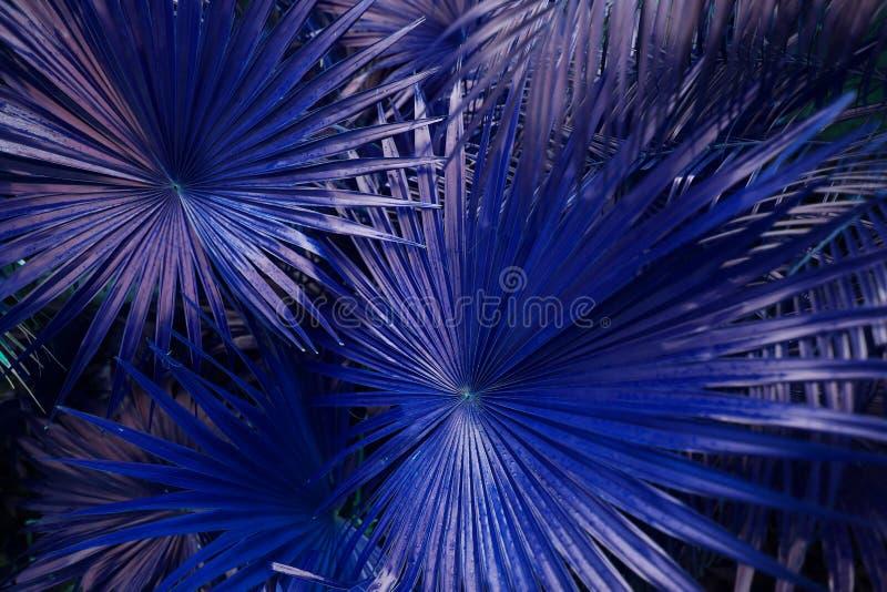 Tropiska blåa palmblad i exotiskt ändlöst sommarland arkivfoton