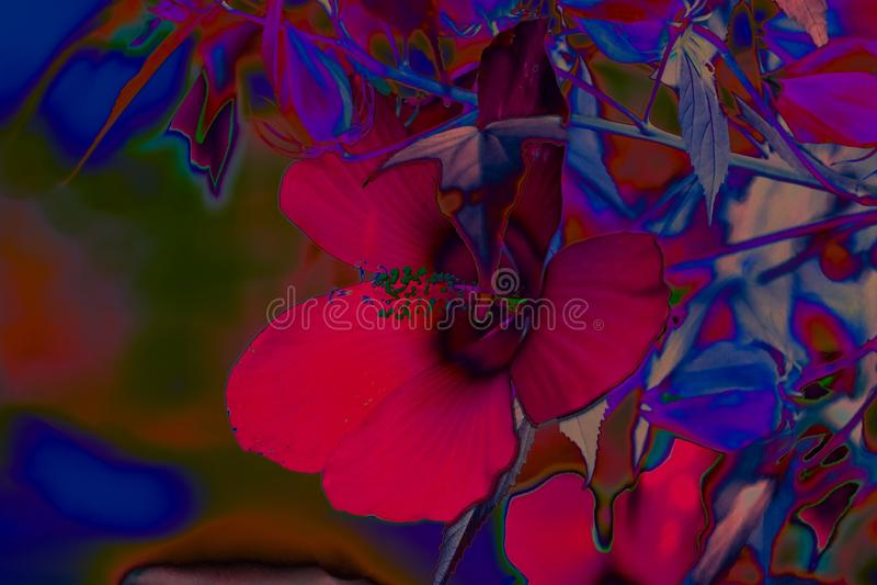 Tropiska blommor i neonljus fotografering för bildbyråer