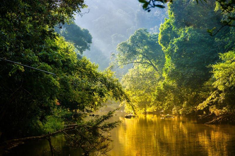 Tropiska djungler av den Thailand ottan på soluppgång arkivbild