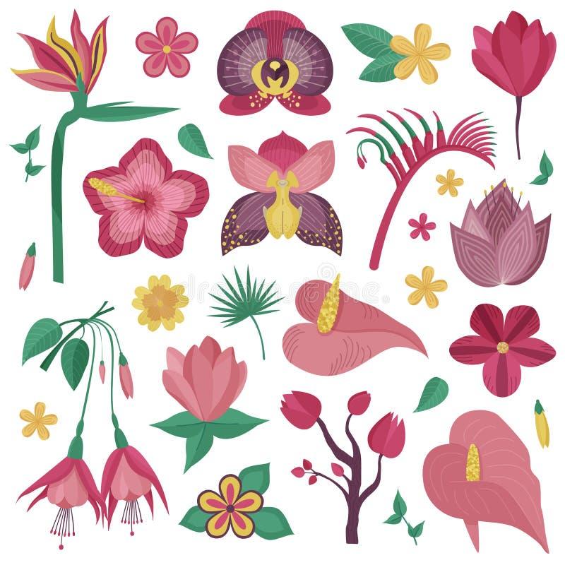 Tropiska exotiska blommor och filialer vektor illustrationer