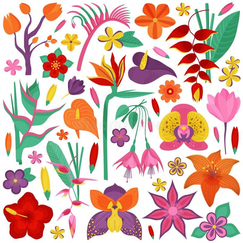 Tropiska exotiska blommor och filialer royaltyfri illustrationer