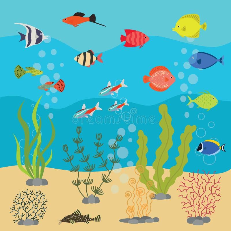 Tropiska exotiska fiskar i det undervattens- akvariet eller havet Vektorillustration av fiskbehållaren med färgrika havsfiskar royaltyfri illustrationer