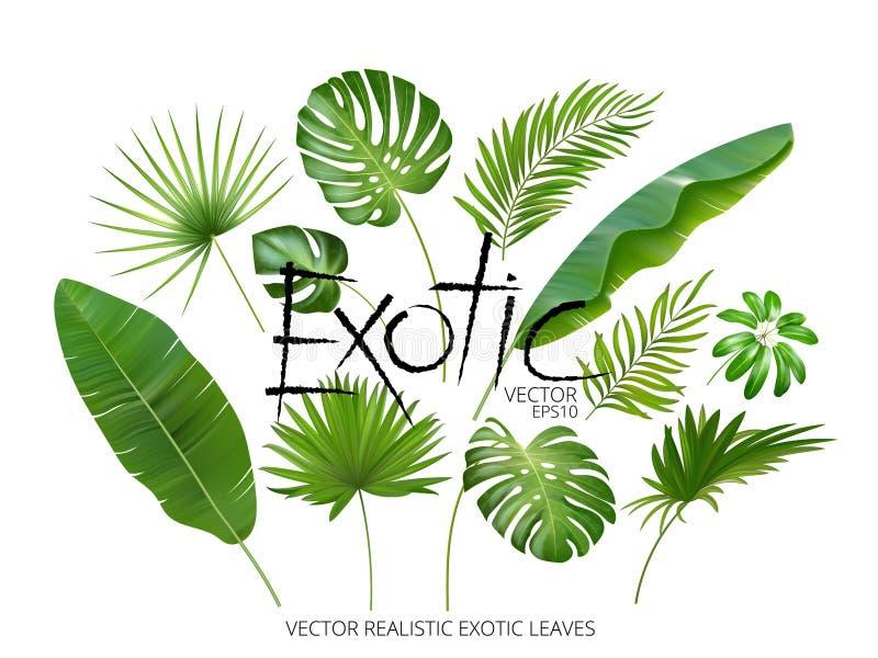 Tropiska exotiska sidor för vektor, realistisk djungelsidauppsättning som isoleras på vit bakgrund Palmbladsamling kvalitet royaltyfri illustrationer