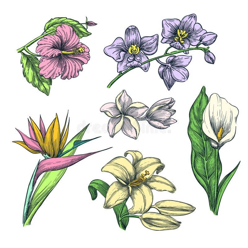 Tropiska färgrika blommor ställde in, vektorn skissar illustrationen Räcka beståndsdelar för den utdragna vändkretsnaturen och fö vektor illustrationer