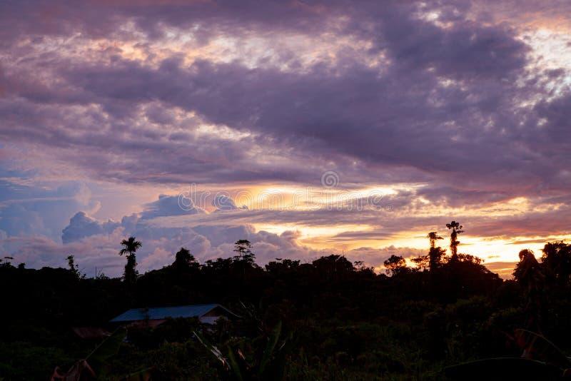 Tropiska färgrika vibrerande solnedgångmoln och träd royaltyfri bild