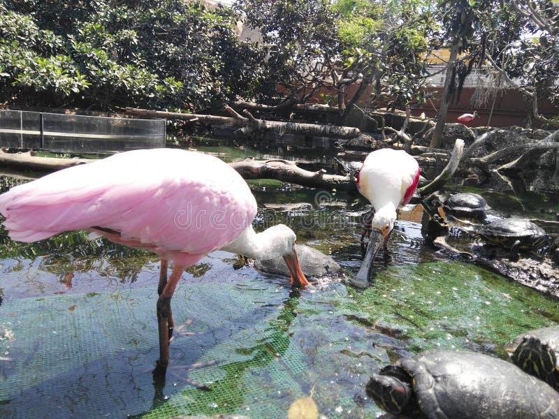 tropiska fåglar royaltyfri bild