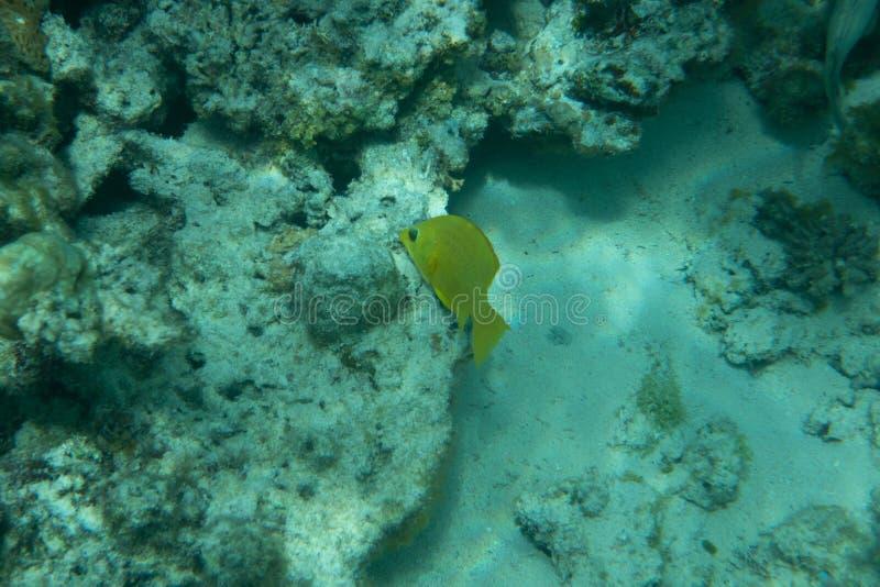 Tropiska fiskar på en härlig korallträdgård i havhavet royaltyfri fotografi