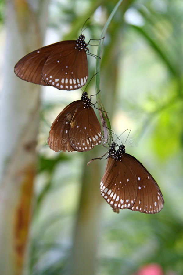 tropiska fjärilar royaltyfri bild