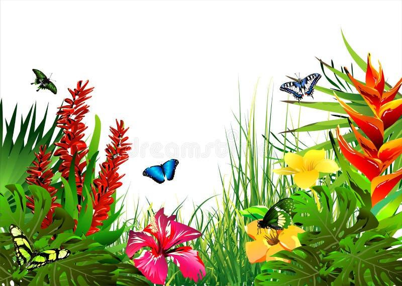 tropiska fjärilsblommor vektor illustrationer