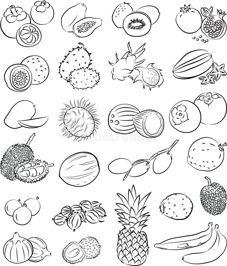 Tropiska frukter stock illustrationer