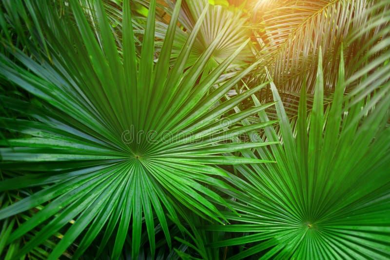 Tropiska gröna palmblad i exotiskt ändlöst sommarland med solljus arkivbild