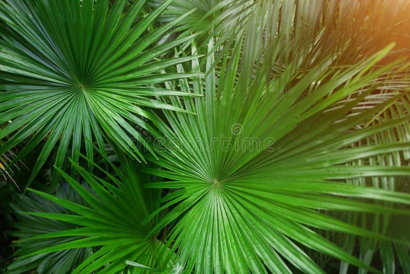 Tropiska gröna palmblad i exotiskt ändlöst sommarland med solljus royaltyfri foto