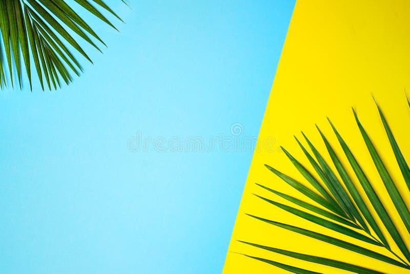 Tropiska gröna palmblad på färgrik bakgrund Guling- och blåttfärger arkivbilder