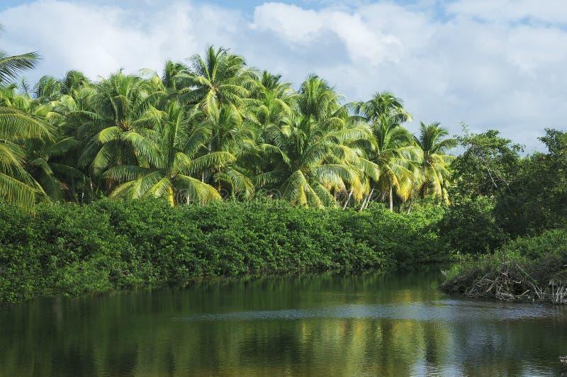 tropiska laguna royaltyfri bild